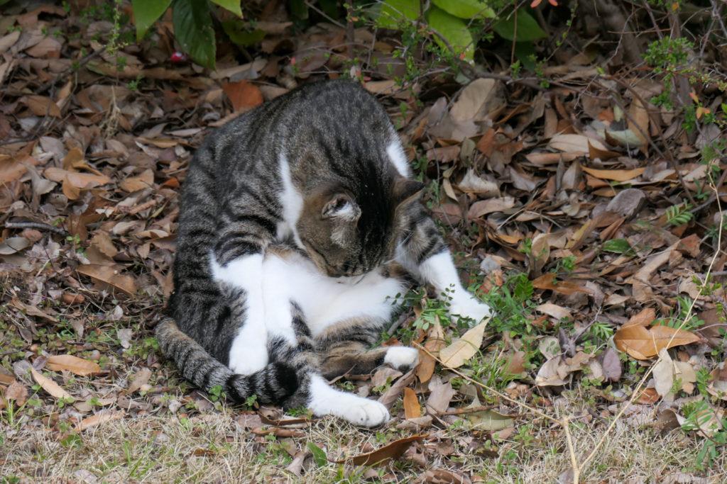 大泉緑地の猫